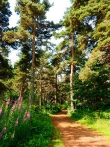 Forest Montbonnet Le Chier