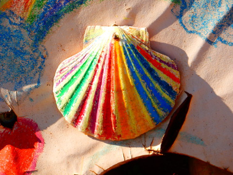 rainbow_scallop