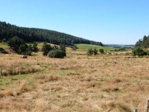 Podiensis - Margeride vers Le Villeret
