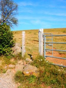 Podiensis - Aubrac - entree parc vaches