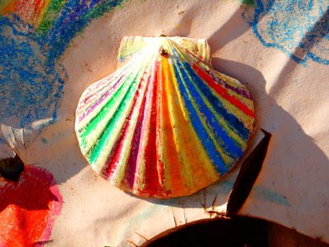 rainbow_scallop