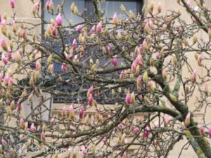 Spring rebirth!